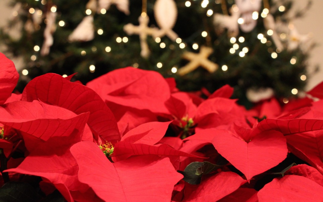 Poinsettia Gifts