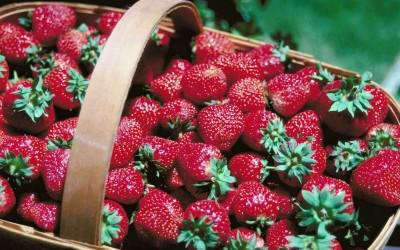 Children's Event: Strawberry Picking