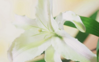 Easter Lily Gifts