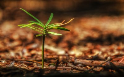 Sustaining and Valuing Earth's Resources