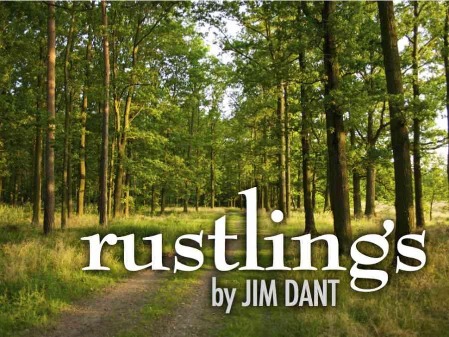 Rustlings